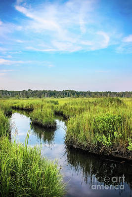 Photograph - West Creek Wetlands by Colleen Kammerer