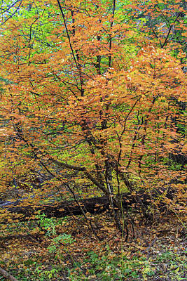 Photograph - West Fork 8030-101817-3 by Tam Ryan