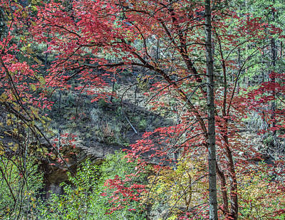 Photograph - West Fork Fall Color 7989-101817-2cr by Tam Ryan