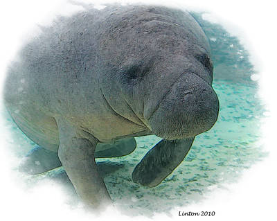 Aquatic Digital Art - West Indian Manatee by Larry Linton