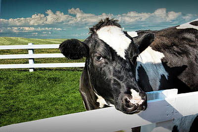 Photograph - West Michigan Dairy Cow by Randall Nyhof