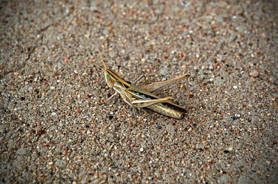 Photograph - West Texas Hopper by Tikvah's Hope