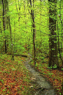 Photograph - West Virginia Appalachian Trail Approaching Keys Gap by Raymond Salani III