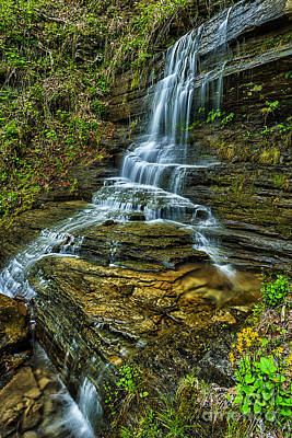 Golden Ragwort Photograph - West Virginia Waterfall And Wildflowers by Thomas R Fletcher