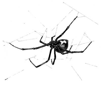 Black Widow Drawing - Western Black Widow by Marcus England