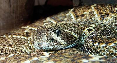 Photograph - Western Diamondback Rattlesnake by Weston Westmoreland