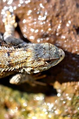 Sagebrush Lizard Photograph - Western Fence Lizard 2 by Noah Cole
