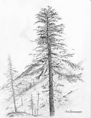 Western Hemlock Art Print by Jim Hubbard