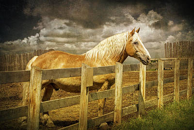 Randall Nyhof Royalty Free Images - Western Horse in Alberta Canada Royalty-Free Image by Randall Nyhof