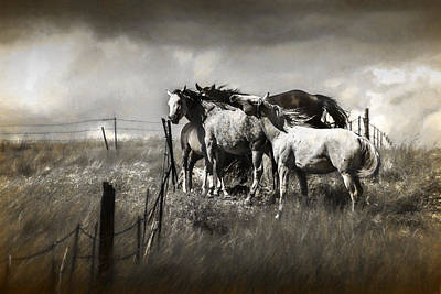 Photograph - Western Horses In A Toned Graphic Photograph by Randall Nyhof