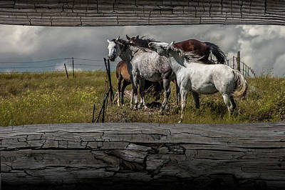 Photograph - Western Horses Through The Fence by Randall Nyhof