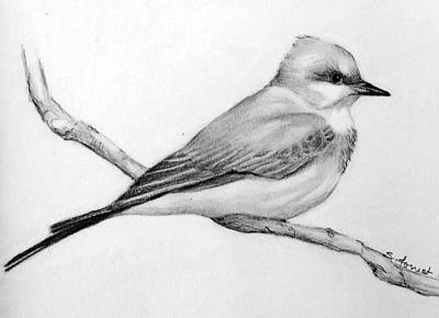 Susan Conner Drawing - Western Kingbird by Susan Conner