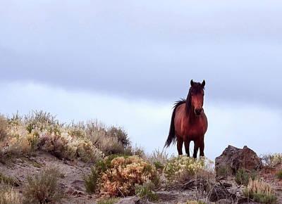 Pyrography - Western Knight by Sandra O'Toole