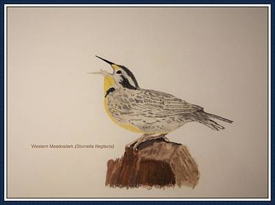 Meadowlark Drawing - Western Meadowlark by Andy Dorsch