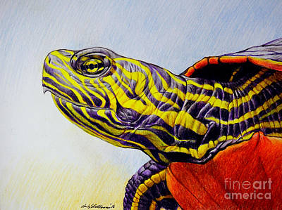 Reptiles Drawings - Western Painted Turtle by Christopher Shellhammer