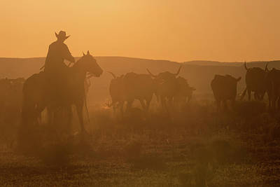 Cattle Drive Photograph - Western Roundup Number 1 by Steve Gadomski