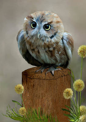 Owl Digital Art - Western Screech Owl by Thanh Thuy Nguyen