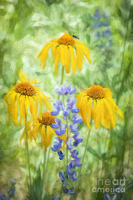 Photograph - Western Sneezeweed And Lupine by Marianne Jensen