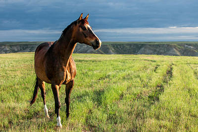 Western Stallion Art Print by Todd Klassy