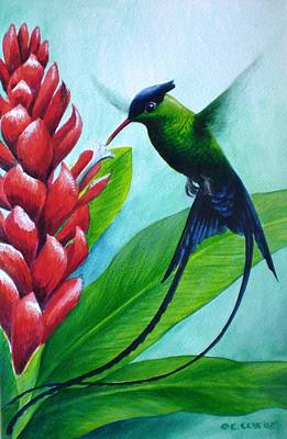 Painting - Western Streamertail Hummingbird by Christopher Cox