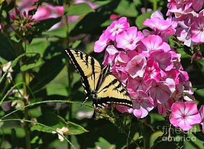 Photograph - Western Swallowtail by Erica Hanel