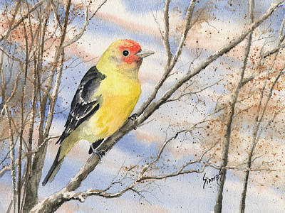Painting - Western Tanager by Sam Sidders
