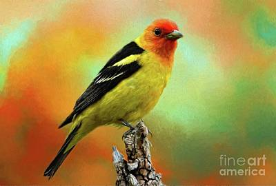 Digital Art - Western Tanager by Suzanne Handel