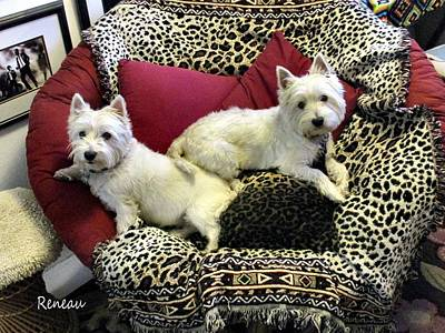 Photograph - Westies Aka W. Highland White Terriers by Sadie Reneau