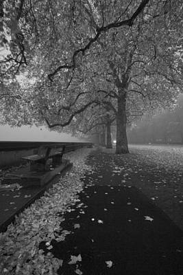 Photograph - Westminster Misty Trees  by Maj Seda