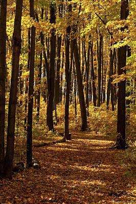 Digital Art - Westridge Lower Park In Autumn by JGracey Stinson