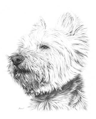 Animals Drawings - Westy by Casey