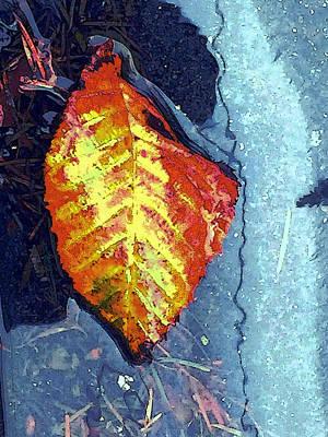 Photograph - Wet Autumn by Nicki Bennett