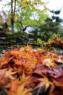 Photograph - Wet Autumn by Perggals - Stacey Turner