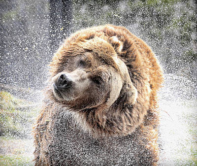 Photograph - Wet Bear by Steve McKinzie