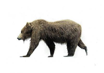 Brown Bear Drawing - Wet Brown Bear by Jack Burdess
