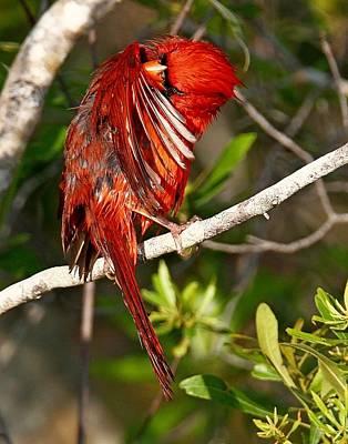 Photograph - Wet Cardinal by Ira Runyan