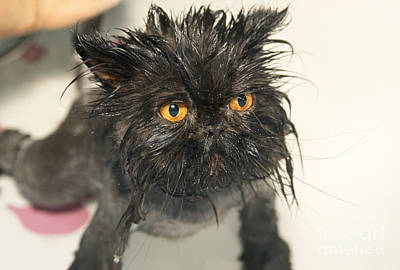 Pet Care Photograph - Wet Cat by M. Watson