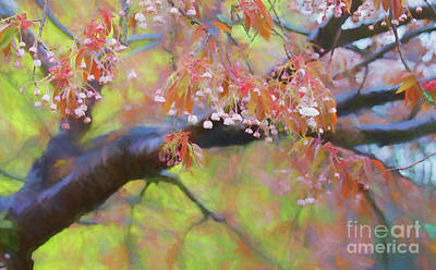Photograph - Wet Cherry Blossoms by Colin Cuthbert