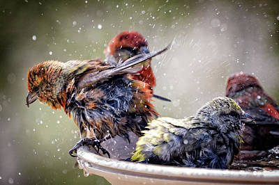 Photograph - Wet Close-up by Schalk Lombard