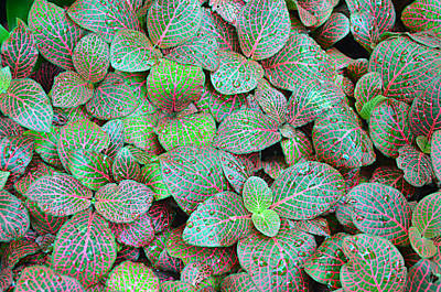 Ally Photograph - Wet Colorful Leaves by Ally White