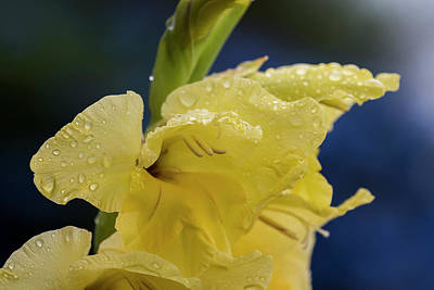 Photograph - Wet Gladiolus Blossom by Robert Potts