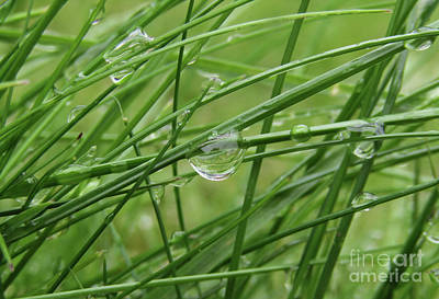 Photograph - Wet Grass 3 by Kim Tran