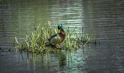 Photograph - Wet Green #g2 by Leif Sohlman
