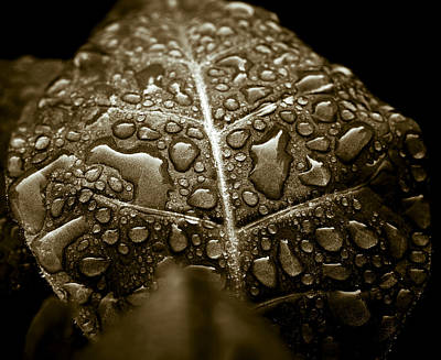 Rain Droplet Photograph - Wet Havana Tobacco Leaf by Frank Tschakert