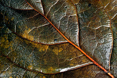 Photograph - Wet Leaf by Terry Elniski