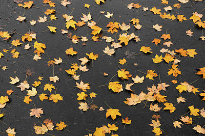 Photograph - Wet Leaves In Fall by Sharon Popek