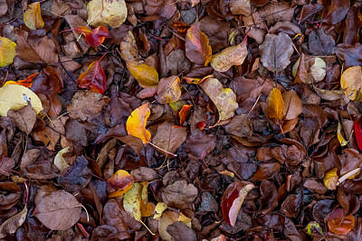 Photograph - Wet Leaves In The Gutter by Derek Dean