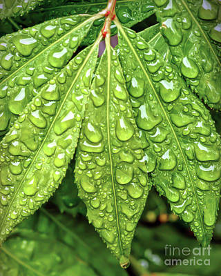 Photograph - Wet Leaves by Kerri Farley