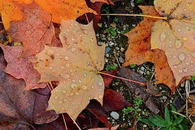 Photograph - Wet Leaves Of Fall On The Ground  by Lyle Crump