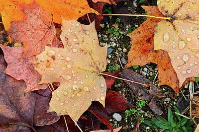 Digital Art - Wet Leaves Of Fall On The Ground Three  by Lyle Crump